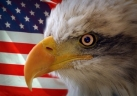 Eagle Head - US Flag Bgrd