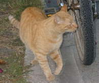 abandonded_cat_and_bike_2.jpg